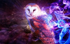 OwlCuteWallpaper