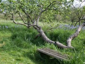 Záhrada opátstva v Glastonbury - Anglicko autor: majka7