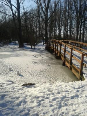 Zimný park - Nitra 2015 autor: majka7